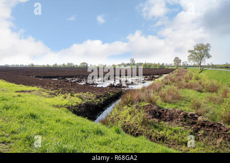 bog landscape with peat extraction under a blue sky in spring, Venner Moor, Lower Saxony, Germany, copy space - Stock Photo
