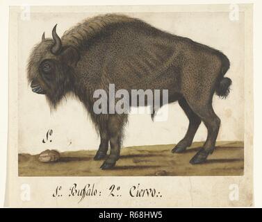 Album Sheet with a Bison, Albrecht Drer, c. 1550 - c. 1570.jpg - R68HW5 1R68HW5 - Stock Photo