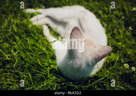 Cat lying on back enjoy sun shine in park sits like a man - Stock Photo