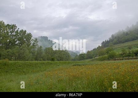 Idyllic Meadow Landscape In The Interior Of Istria - Stock Photo