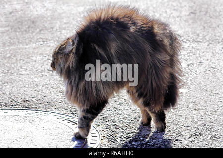 a norwegian forest cat is evil and makes a cat hump. a cat grows up and threatens
