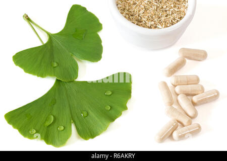 Ginkgo Leaves With Capsules And Dried Herb On White Background - Stock Photo