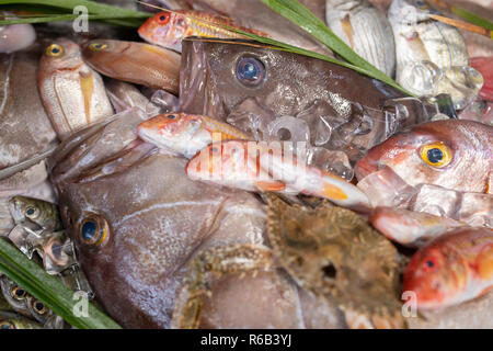 Lobster, octopus, red mullet, boops boops, sea bass, sea bream, white grouper, prawns and various fresh seafood and fishes on the ice in fish market - Stock Photo