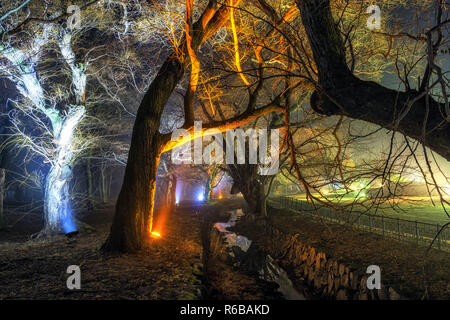 gyerim forest in gyeongju at night - Stock Photo