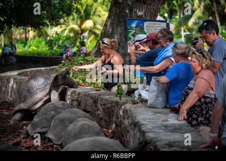 Turtles in national park on island La Digue Island Anse Source d'Argent Seychelles. Seychelles giant tortoise, Aldabran giant tortoise, Aldabra giant  - Stock Photo
