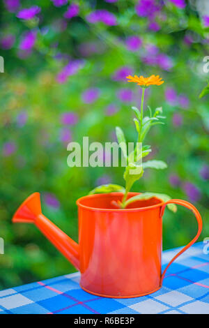 Calendula In An Ewer - Stock Photo