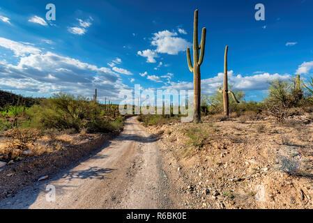 Arizona desert road with Saguaro cacti - Stock Photo