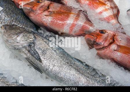 Fisch zum Verkauf auf einem Markt in Madrid, Spanien - Stock Photo