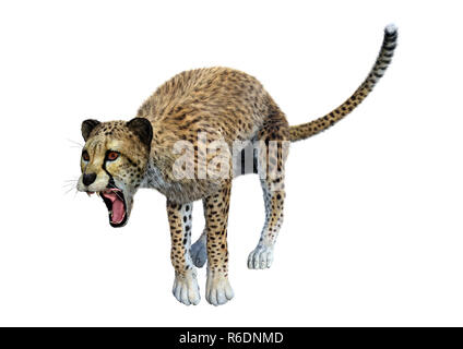 3D Rendering Big Cat Cheetah on White - Stock Photo