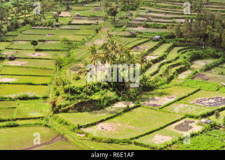 Green Rice Terraces In Bali, Indonesia - Stock Photo