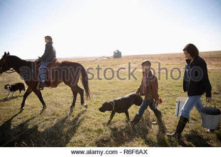 Farmer and son with horse and dogs walking in sunny field - Stock Photo
