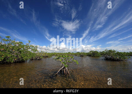 Mangrove trees under a dramatic cloudscape in the shallows of Barnes Sound, Florida. - Stock Photo