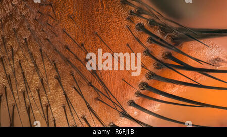 Extreme magnification - Fly hairs on it's face at 20:1 magnification - Stock Photo