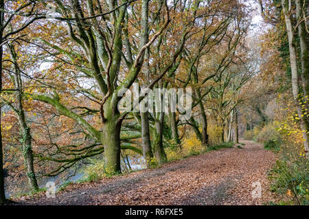 A Tree Lined, Autumn View Along Rolle Road, Site of the Victorian Rolle Canal #3; Great Torrington, Devon, England. - Stock Photo