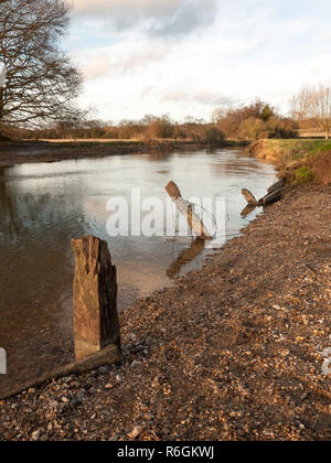 old dead wood stumps standing in river lake water landscape - Stock Photo