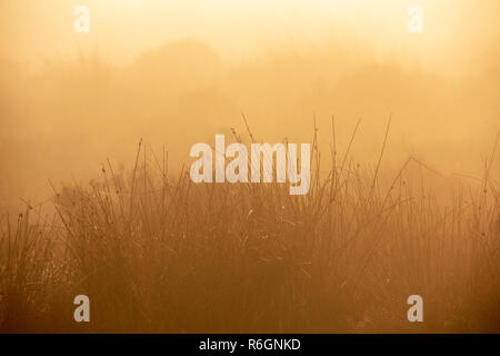 Misty Sunrise Morning at Baslow Edge in the Peak District, Derbyshire England UK - Stock Photo