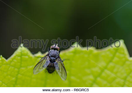fly on green leaf - Stock Photo