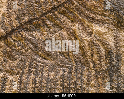Stone texture with petrified prehistorical ferns frond - Stock Photo