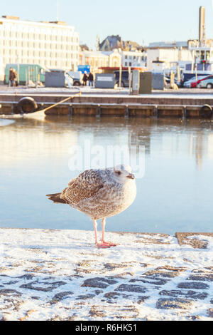 Seagull on the wharf in Helsinki, Finland - Stock Photo
