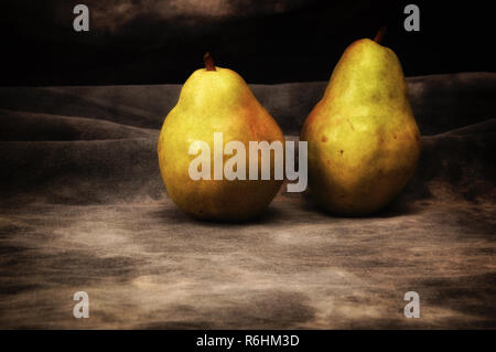 Two large ripe pears on gray mottled background, set up, composed and photographed to resemble old fashioned still life painting. - Stock Photo