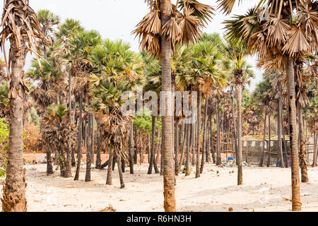 Green palm trees grow out of the red sand on the background of the blue sky with small village beach. - Stock Photo