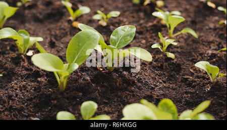 New sprout in the farm - Stock Photo