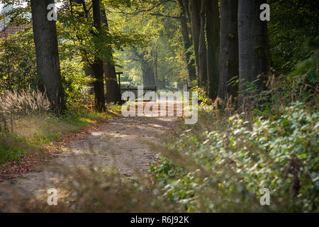 sandy path in autumn forest with sunbeams from the sunrise. Tree row interrupted with wooden fence and a distant perspective - Stock Photo