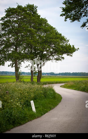 Old oak trees along the side of the road where a country road curves around in a revolving manner. Atmospheric landscapse scene that indicates reflect - Stock Photo