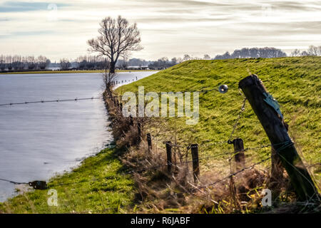 Bare and weathered branches above the water surface in a flooded area next to a wide Dutch river. It is in the end of the winter season. - Stock Photo