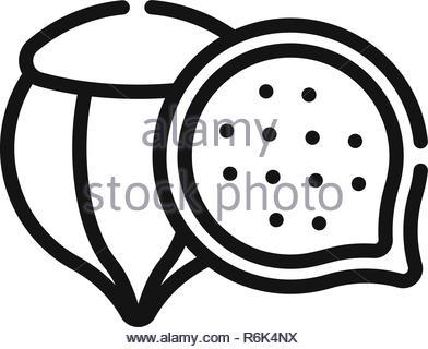 Chestnut vector icon - Stock Photo