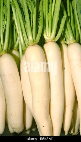 fresh radishes in market - Stock Photo