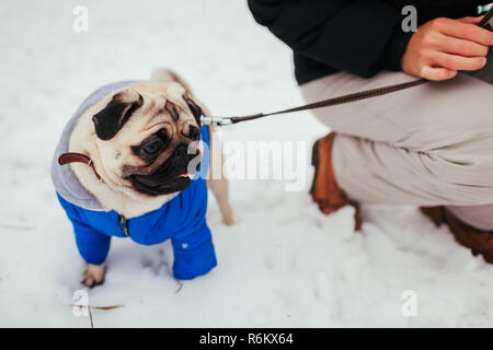 Pug dog walking on snow with his master. Puppy wearing winter coat - Stock Photo