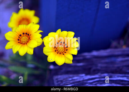 Close up view of small wild yellow flowers - Stock Photo