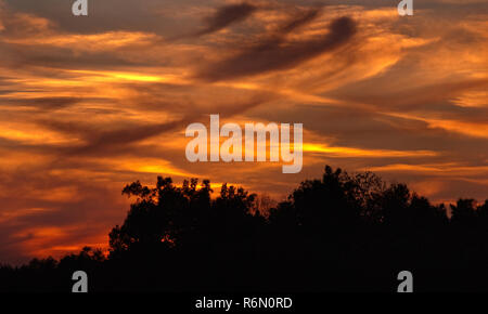 Trees are silhouetted against a fiery sky with cirrus and cirrostratus clouds at sunset, Oct. 10, 2010, in Union City, Tennessee. - Stock Photo