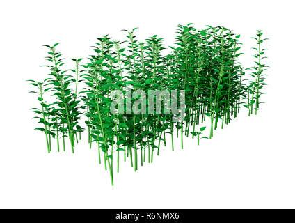 3D Rendering Common Nettle on White - Stock Photo