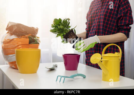 woman planting flower in pot at home - Stock Photo