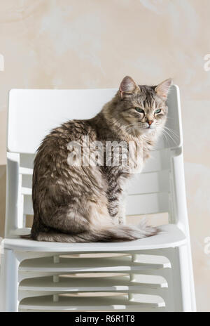 Adorable siberian cat sitting in a garden, long haired - Stock Photo