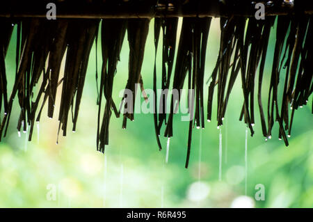 Rain drops keep falling from thatched roof - Stock Photo