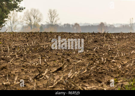 Late autumn. Mown corn field.The remains of the stems on the stubble.Trees and forest in fog on the horizon .Site about agriculture.Podlaskie,Poland. - Stock Photo