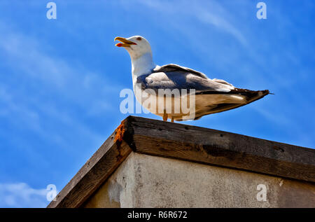 White seagull sitting on the wall against the blue sky - Stock Photo