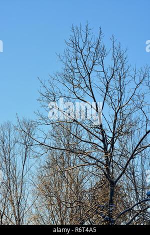 Ice-coated trees near sunset, Greater Sudbury, Ontario, Canada - Stock Photo