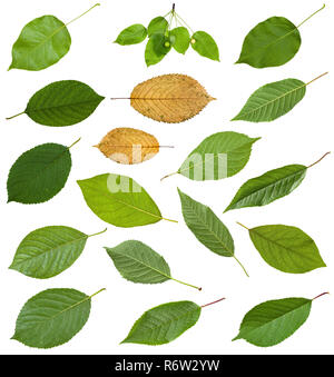 set of various leaves of prunus trees isolated - Stock Photo