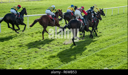 Horse Racing Lethbridge