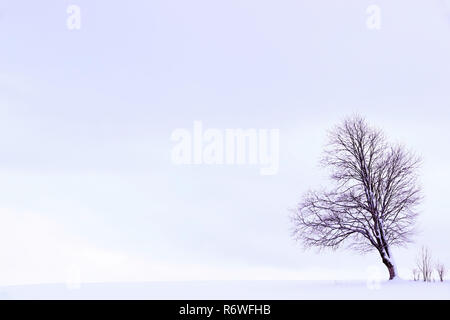 minimalist winter landscape with a tree on a snowy field - Stock Photo