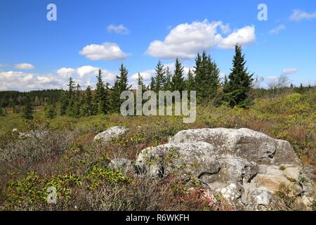 Dolly Sods National Wilderness Area - Stock Photo