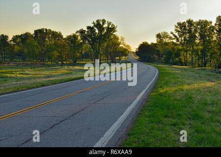 Pecan trees cattle near Route 66, DePew, Oklahoma, USA - Stock Photo