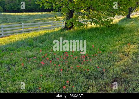 Roadside rural landscape, DePew, Bristow, Oklahoma, USA - Stock Photo