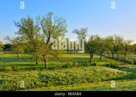 Roadside pecan trees in spring, Bristow,  Oklahoma, USA - Stock Photo