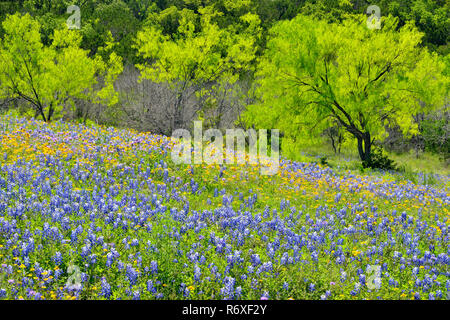 Burnet Texas Usa Stock Photo 29525665 Alamy
