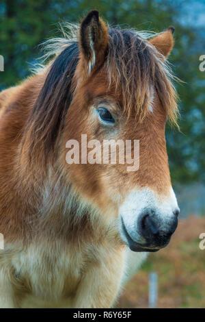 young donkey head - Stock Photo